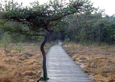 Een wandelpad door de bossen in Delden.