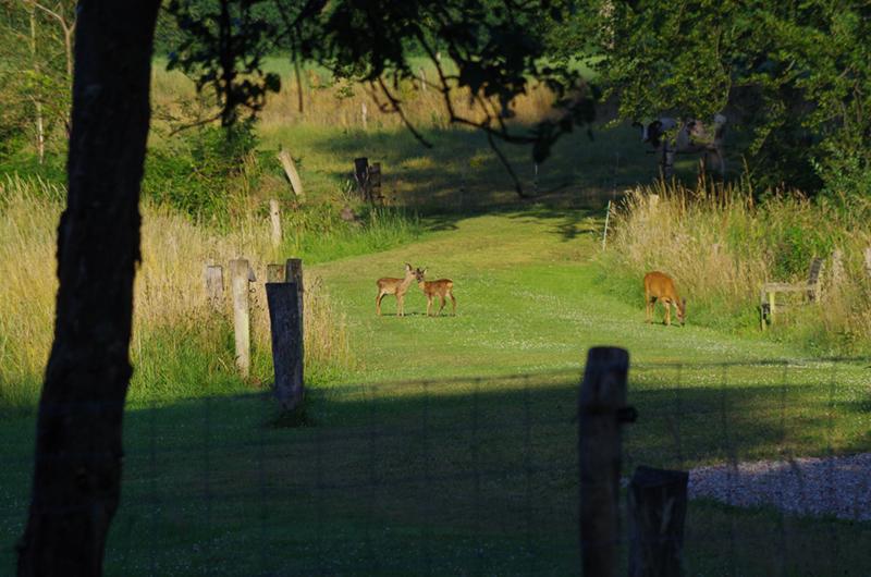 Drie hertjes op een weiland in de buurt van Delden.