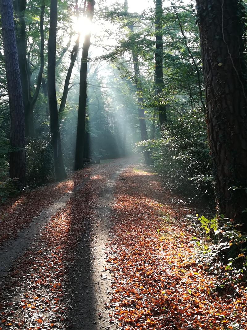 Zon schijnt tussen de bomen door in een bos in Twente.