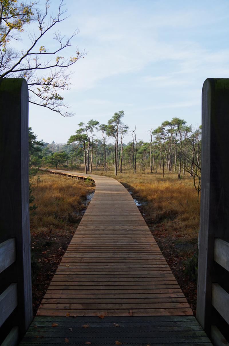 Een houten pad tussen de bomen in de herfst van Twente.
