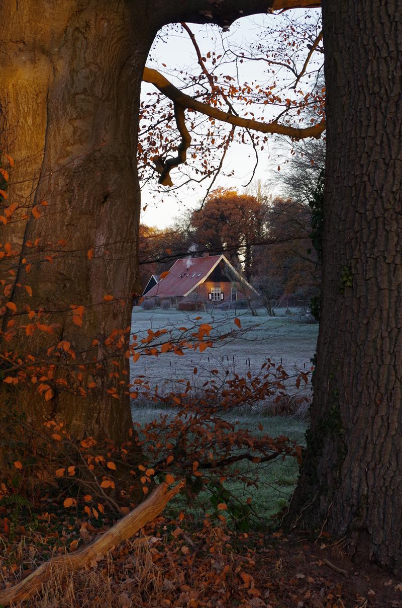 De groepsaccommodatie in Twente van een afstand tussen de bomen door.