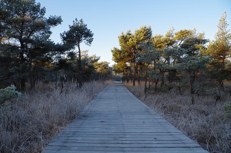 Een pad door het bos in Twente in de winter.